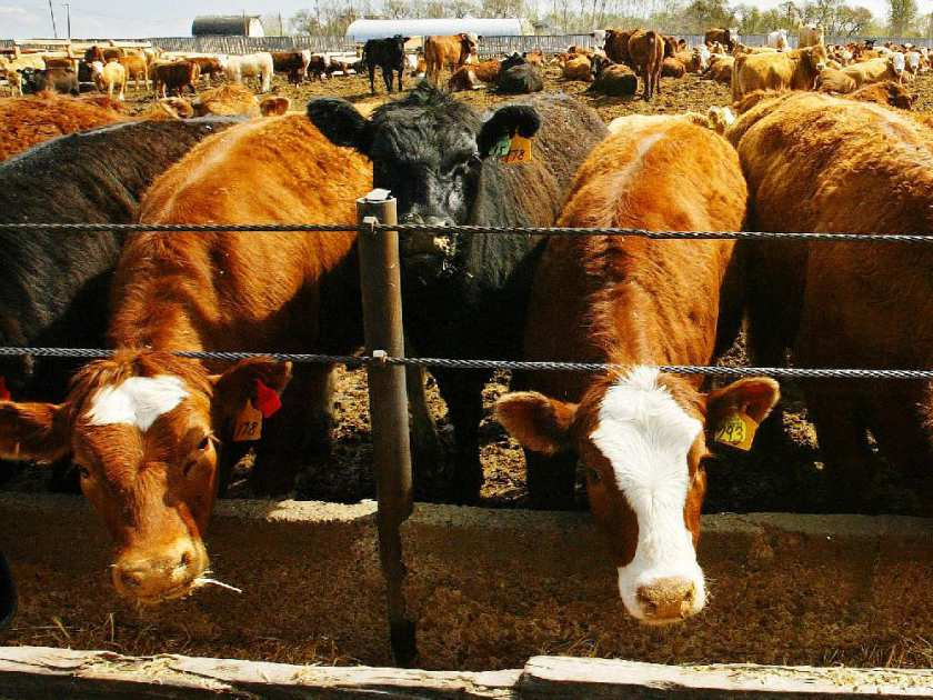 Agency promoting Alberta livestock industry is being dismantled by provincial government